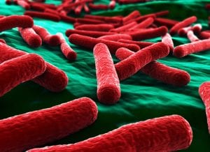 E. Coli bacilli. Environmental testing from U.S. Micro Solutions