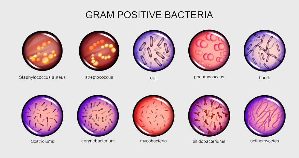 Gram Positive Bacteria. Environmental Testing from U.S. Micro Solutions